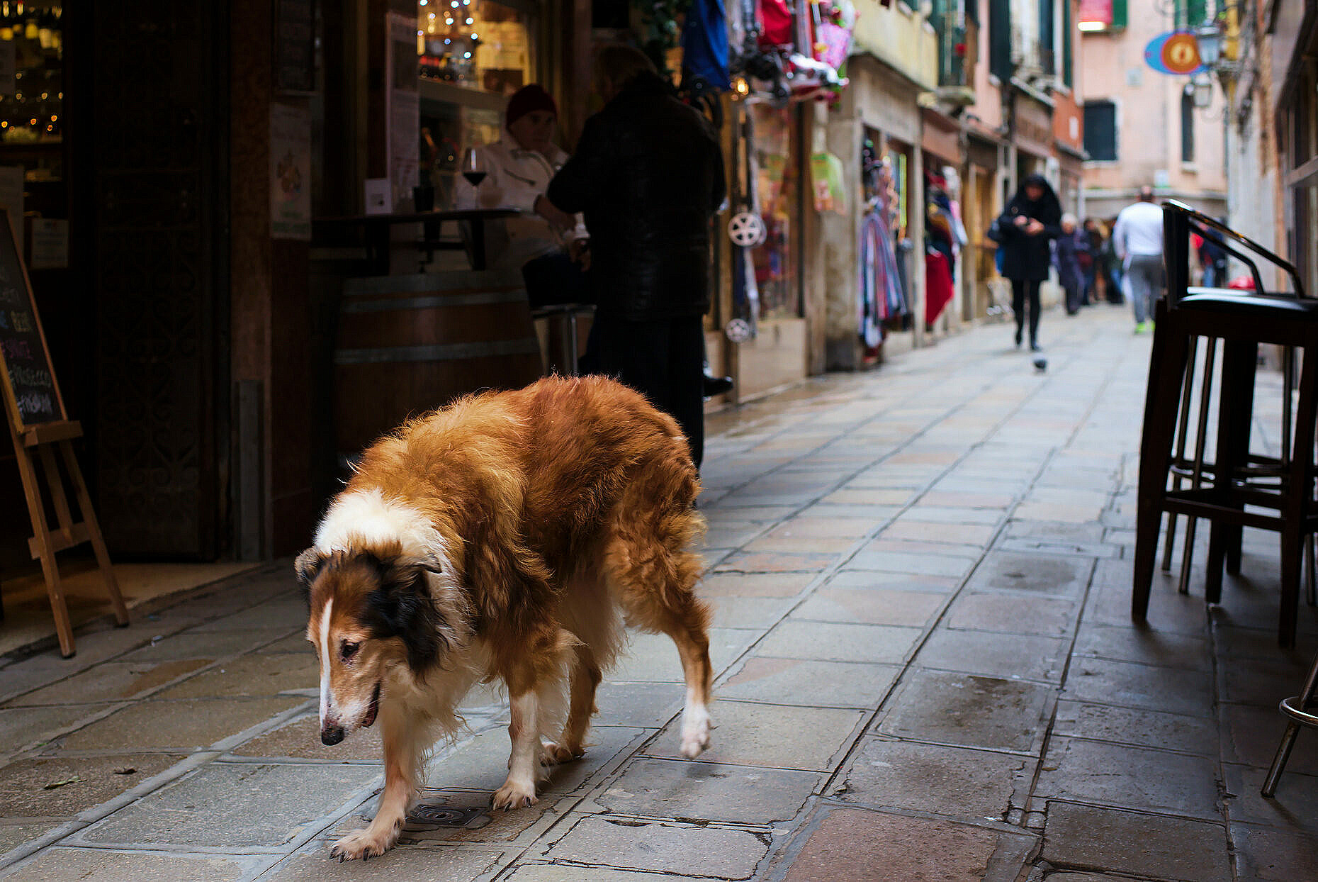 Penny, a scotch collie, wandering the alleyways of Venice after the death of her owner.