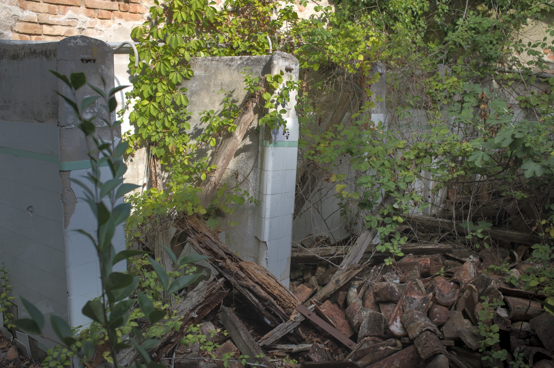 Overgrown and collapsed ruins on Poverglia