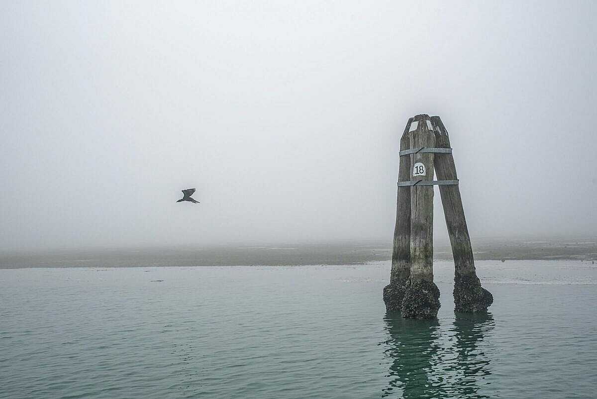 The Venetian lagoon on the fog - briccola and cormorant in flight