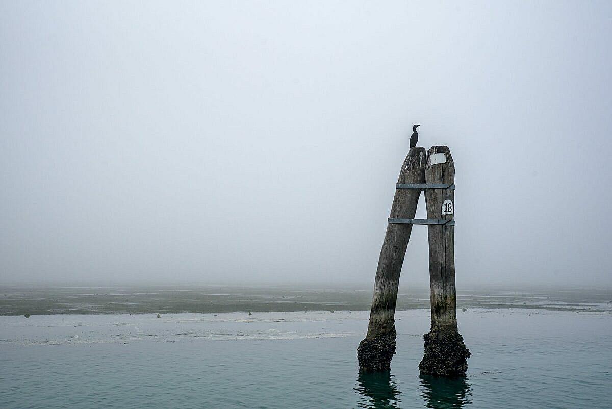 The Venetian lagoon on the fog - briccola with cormorant